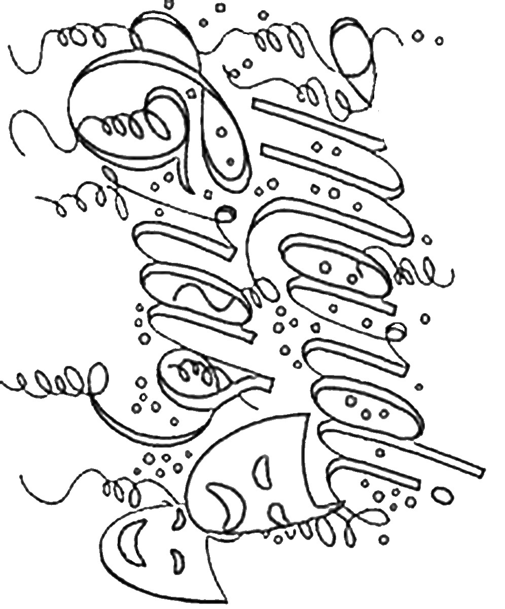 996x1200 Mardi Gras Coloring Pages Free Printable