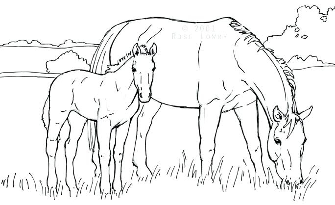 mare and foal coloring pages at getdrawings free for personal RE MAX 684x418 mare and foal coloring pages filly coloring pages colouring pages