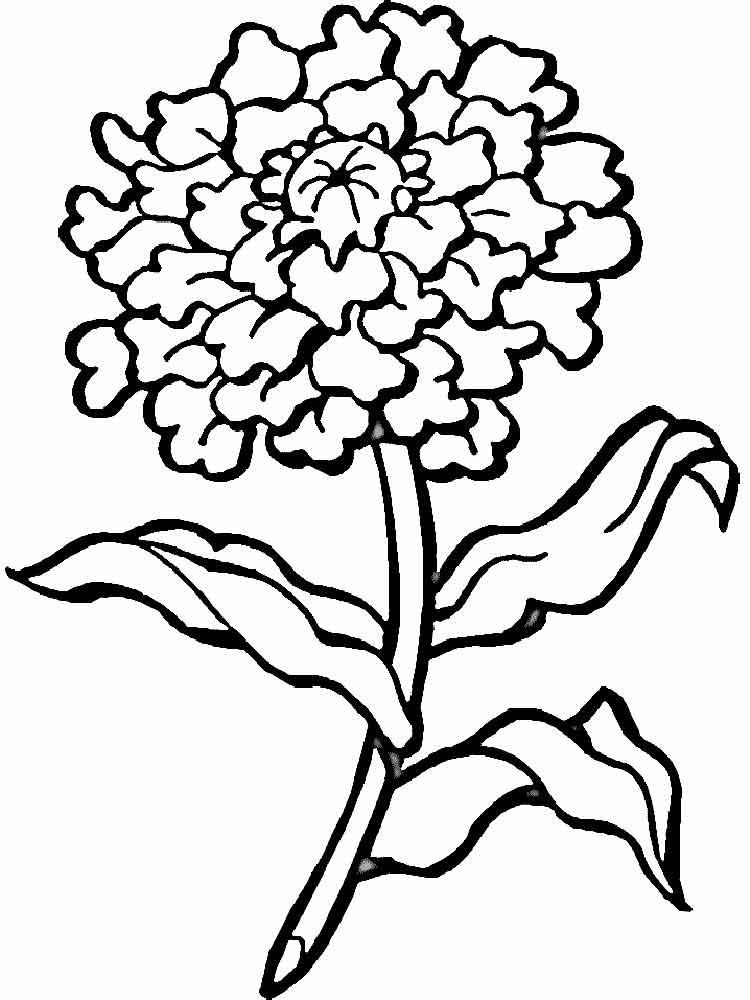 750x1000 Marigold Coloring Page Marigold Flower Coloring Pages Download