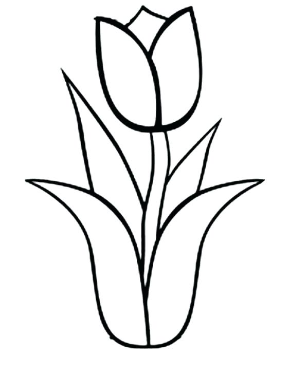 564x730 Marigold Coloring Page Marigold Flowers Coloring Pages Best Flower
