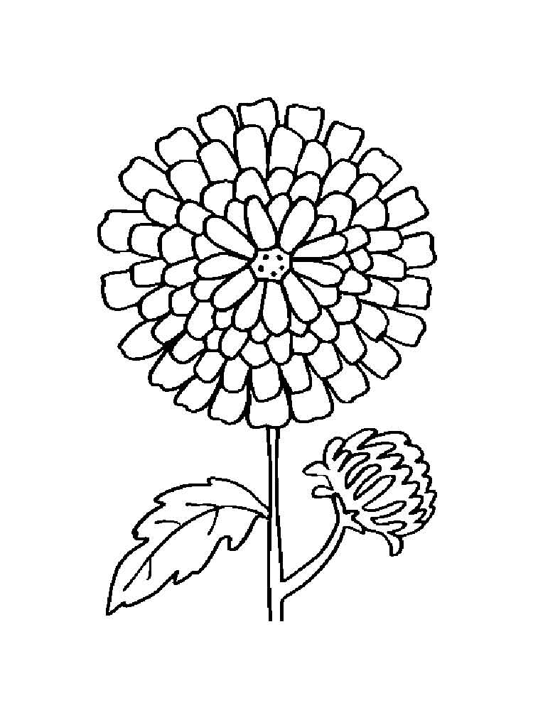 750x1000 Marigold Flower Coloring Pages Download And Print Marigold Flower