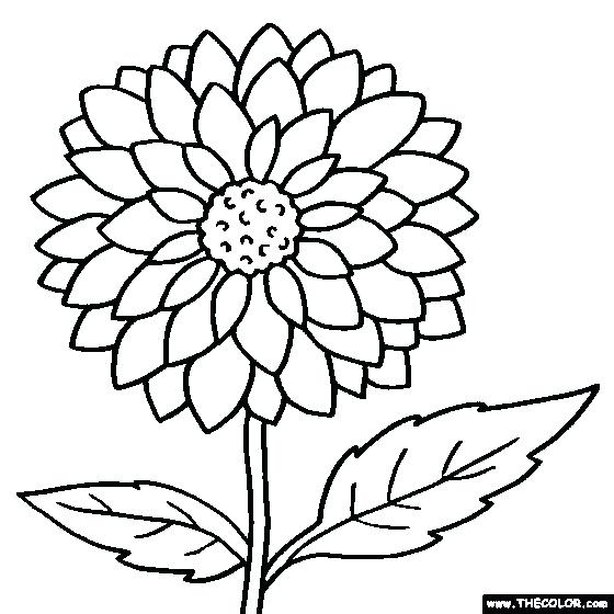 560x560 Marigold Coloring Page