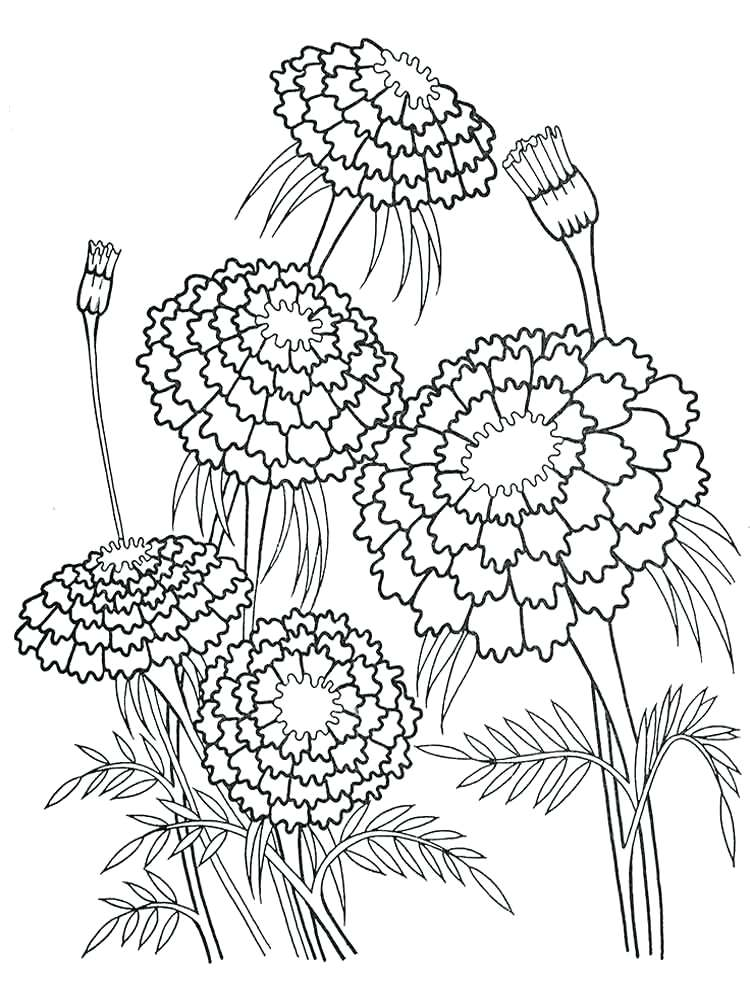 750x1000 Flower Coloring Pages For Adults Plus Marigolds Flower Coloring