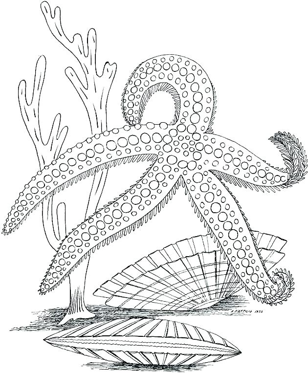 630x763 Marine Coloring Page Marine Coloring Pages Seascape Ocean