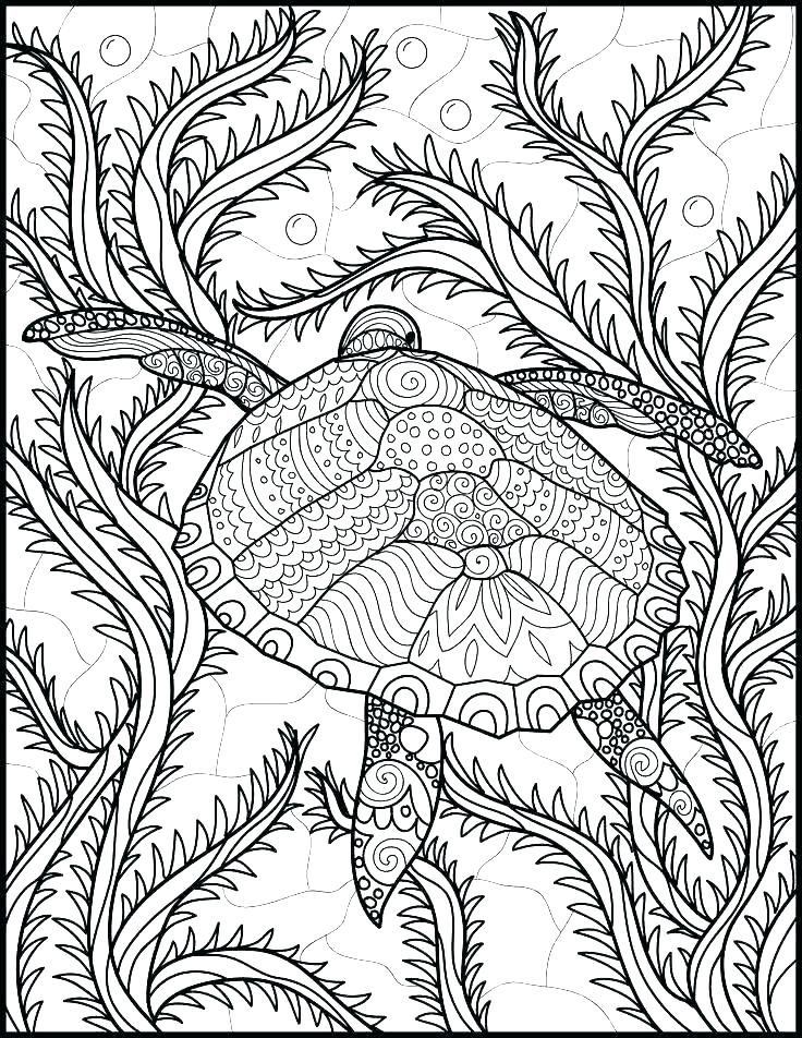 736x952 Marine Life Coloring Pages Sea Life Coloring Pages Large Size