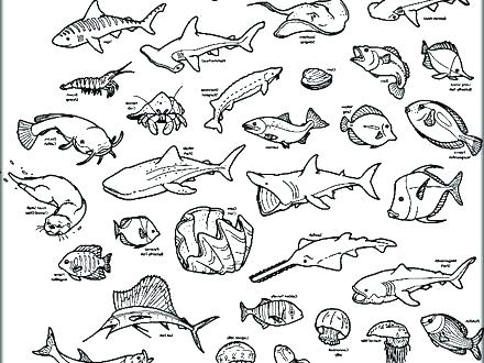 440x330 Animals Coloring Pages Printable Sea Animals Coloring Pages