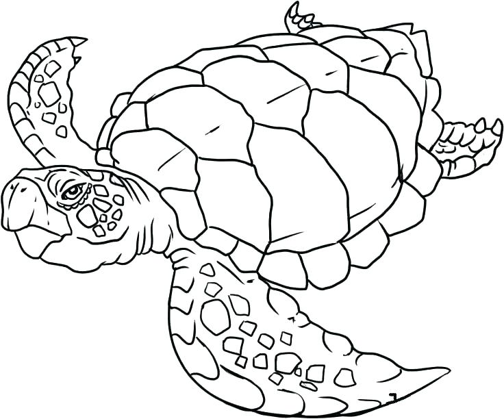736x612 Sea Creature Coloring Pages Cool Sea Animals Coloring Pages