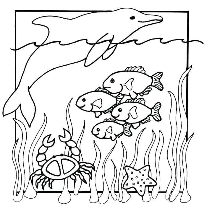 700x707 Coloring Pages Sea Animals Ocean Coloring Pages Sea Animal