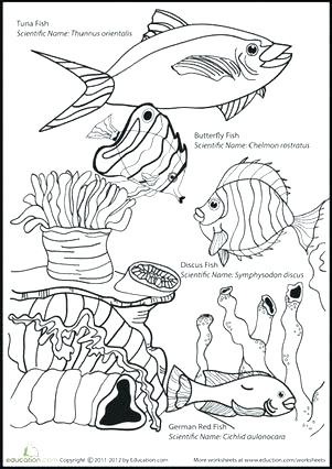 301x426 Marine Coloring Page Ocean Life Coloring Pages Plus Ocean Coloring