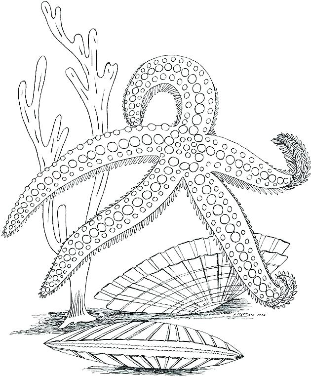 630x763 Marine Coloring Pages Marine Coloring Page Marine Coloring Pages