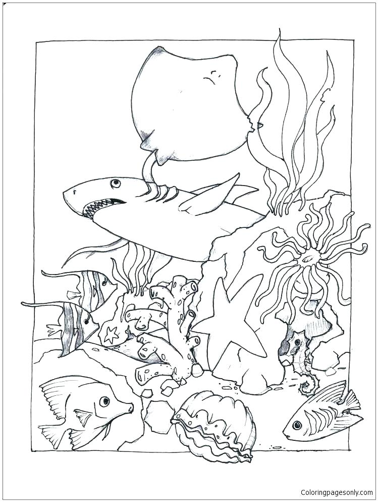 749x993 Sea Lion Coloring Page Printable Coloring Page Under The Sea