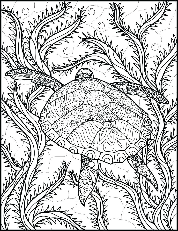 736x952 Ocean Life Coloring Pages Free Printable Ocean Coloring Pages