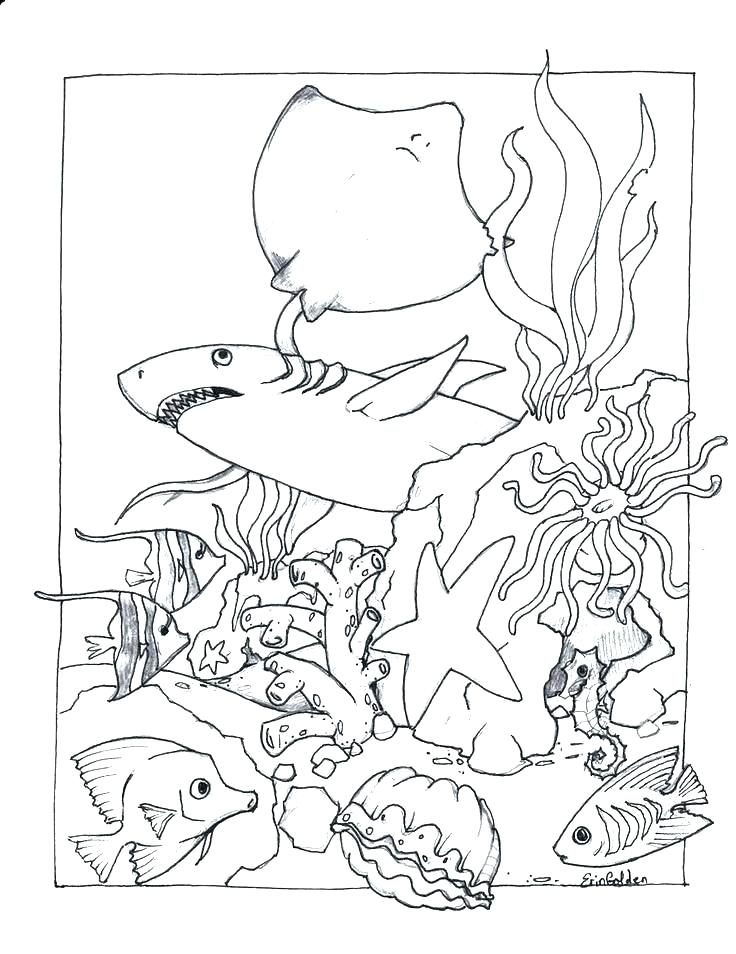 736x954 Ocean Life Coloring Pages Sea Animals Coloring Pages Life Ocean
