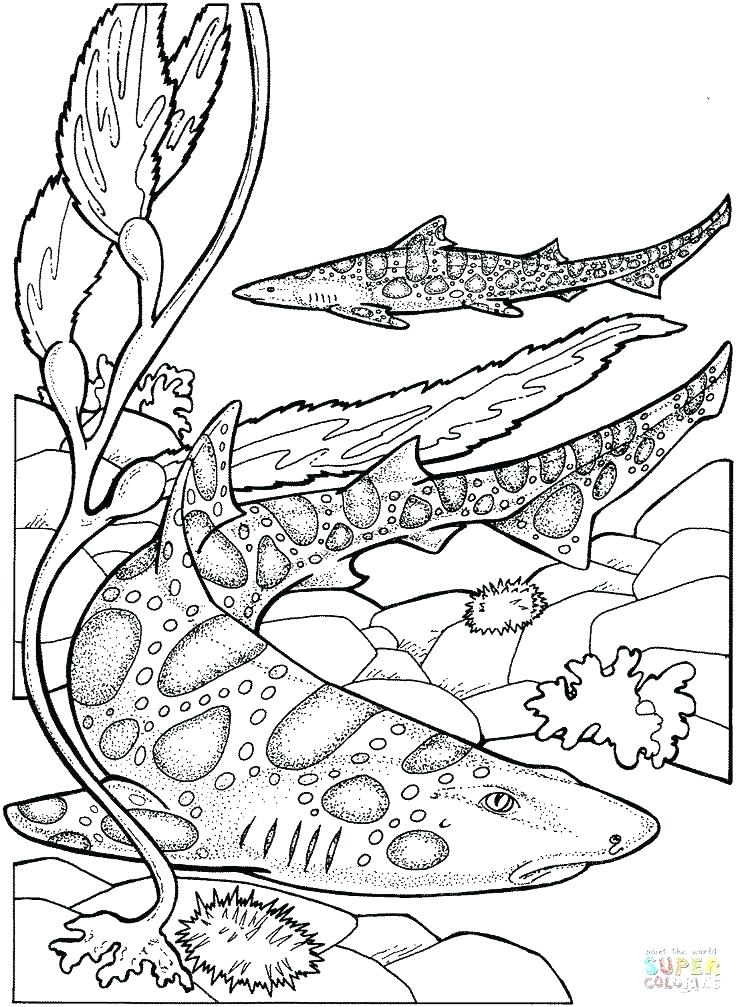 736x1007 Marine Life Coloring Pages