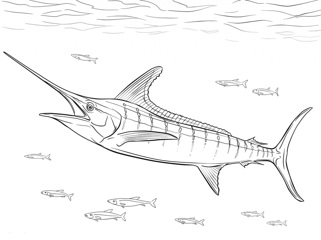 1024x768 Flying Fish Coloring Page