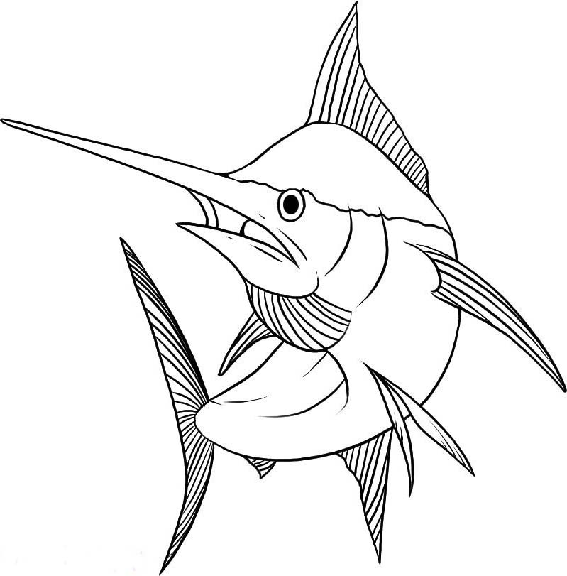 799x811 Marlin Coloring Pages