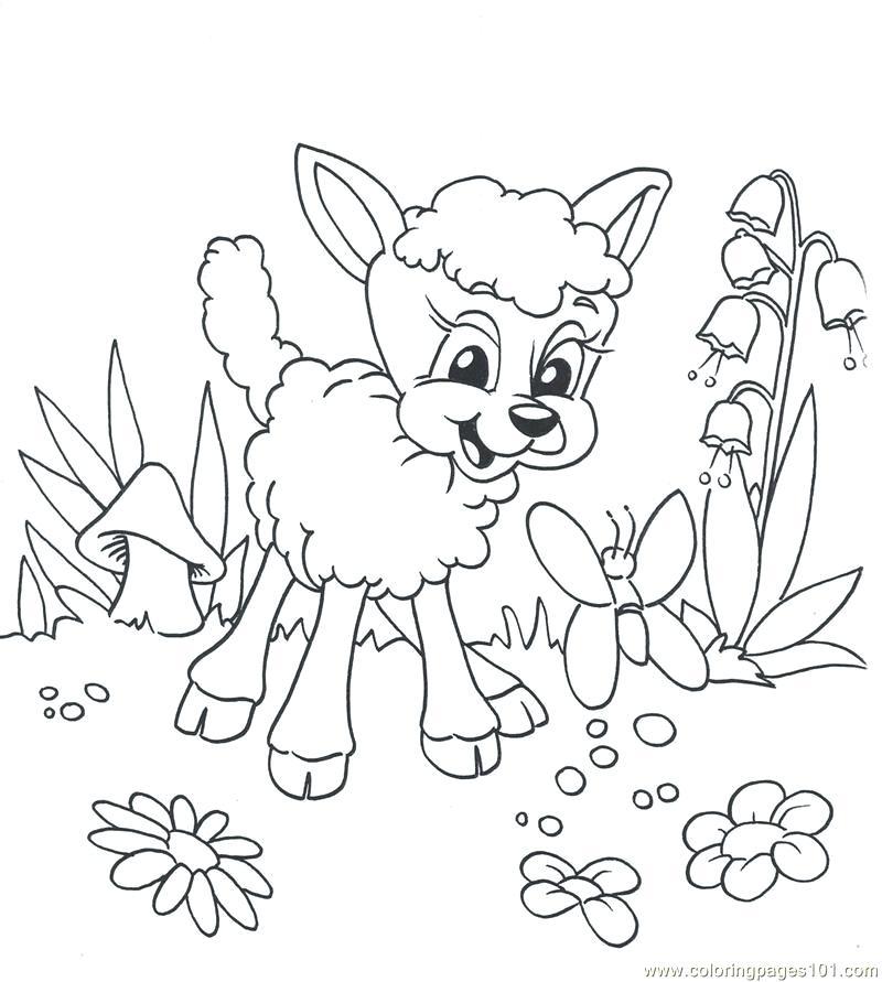 800x891 Fresh Lamb Coloring Page For Lamb Animal Coloring Page Mary Had