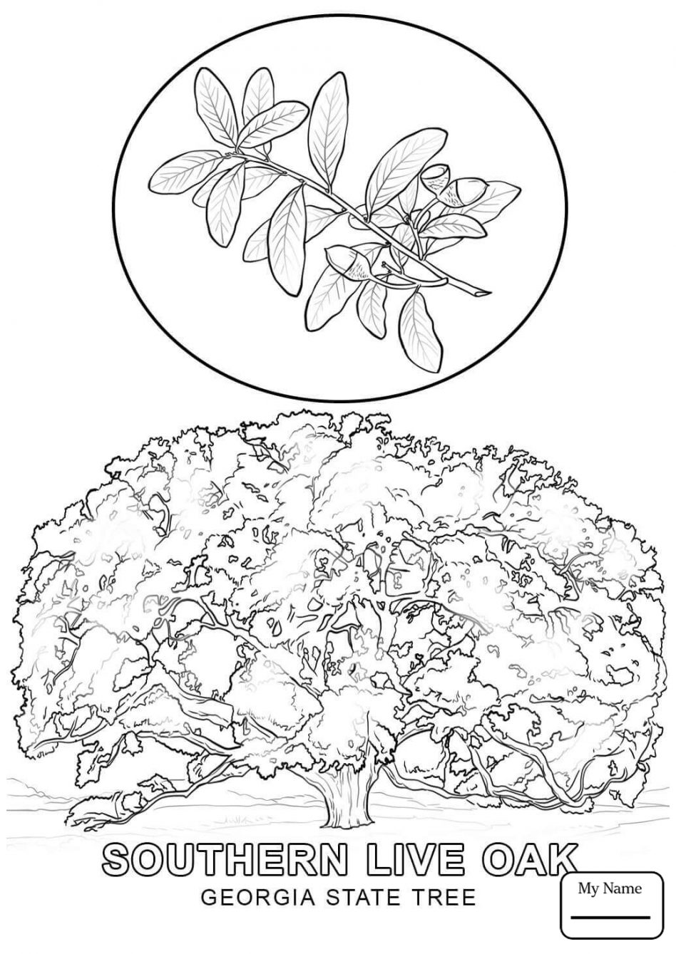 948x1339 Greatest Hawaii State Tree Coloring Page Maryland Free Printable