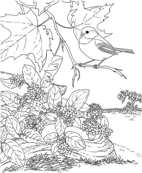 592x720 Massachusetts Chickadee Coloring Page Purple Kitty Coloring