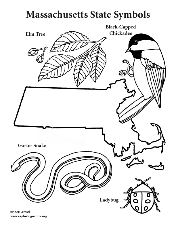 612x792 Massachusetts State Symbols Coloring Page