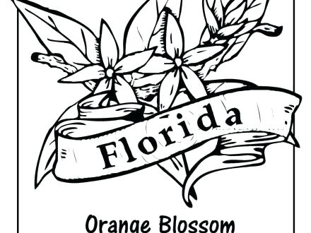 440x330 State Flower Coloring Pages