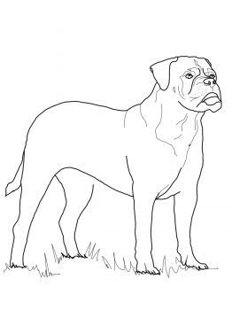 Mastiff Coloring Pages