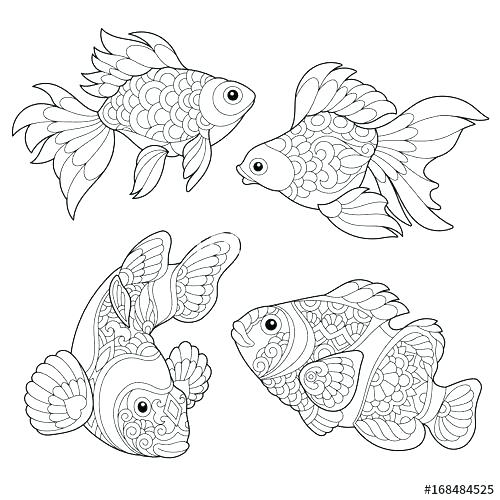 500x500 Matisse Coloring Pages Coloring Pages Goldfish Coloring Page