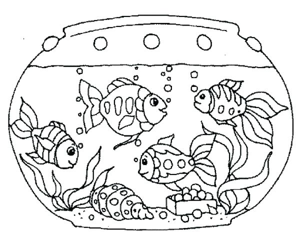 600x470 Matisse Coloring Pages Classy Goldfish Coloring Page Online