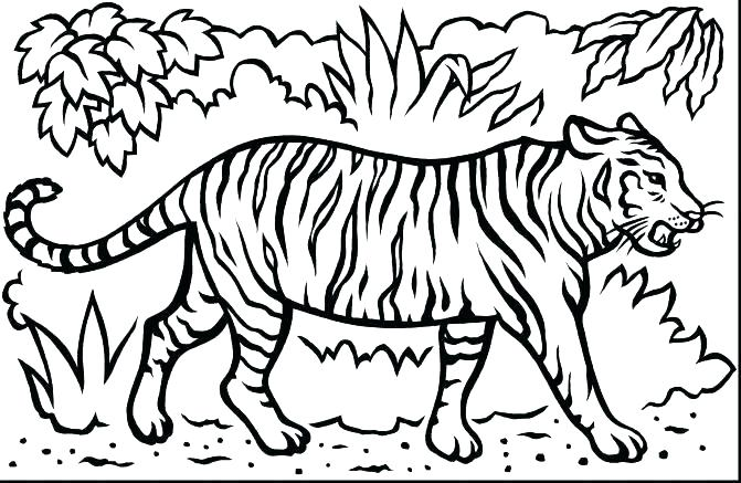 671x437 Tiger Without Stripes Coloring Page Tiger Without Stripes Coloring