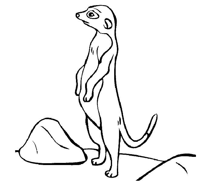 Meerkat Coloring Page