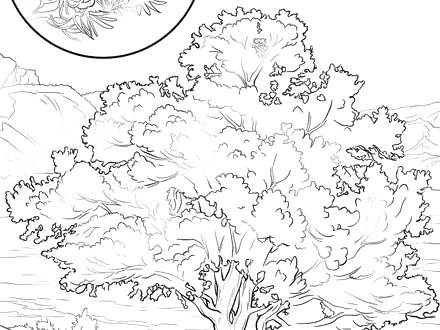 440x330 Coloring Pages Map Coloring Sheets Coloring New State Tree