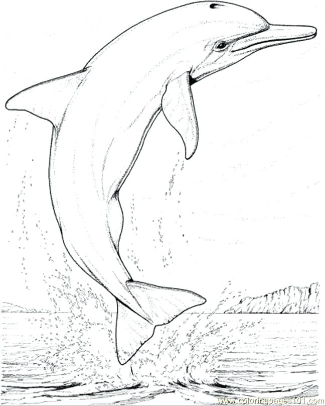 650x808 Printable Dolphin Coloring Pages Coloring Pages Dolphin Jump