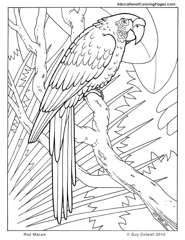 612x792 Coloring Pages Com Packed With Coloring Pages Heat Coloring Pages
