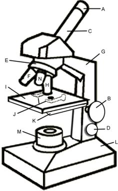 236x383 Free Parts Of A Microscope Label Worksheet Science Resources