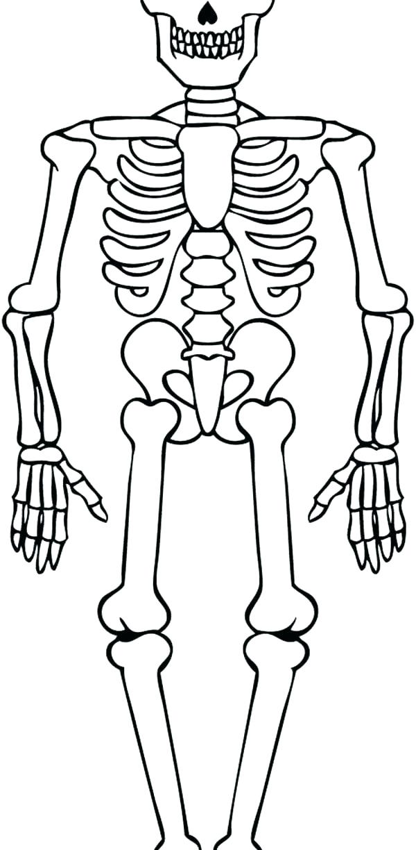 Minecraft Skeleton Coloring Pages At Getdrawings Com Free For