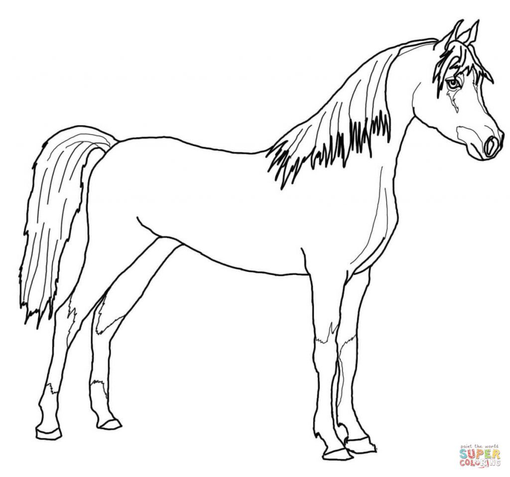 1024x959 Arabian Horse For Coloring Page