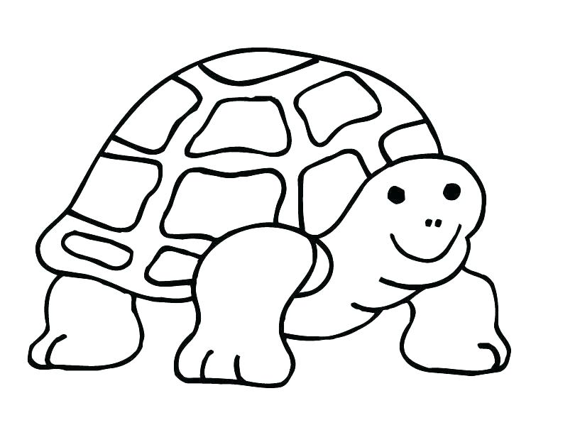 The Best Free Tortoise Coloring Page Images Download From 205 Free