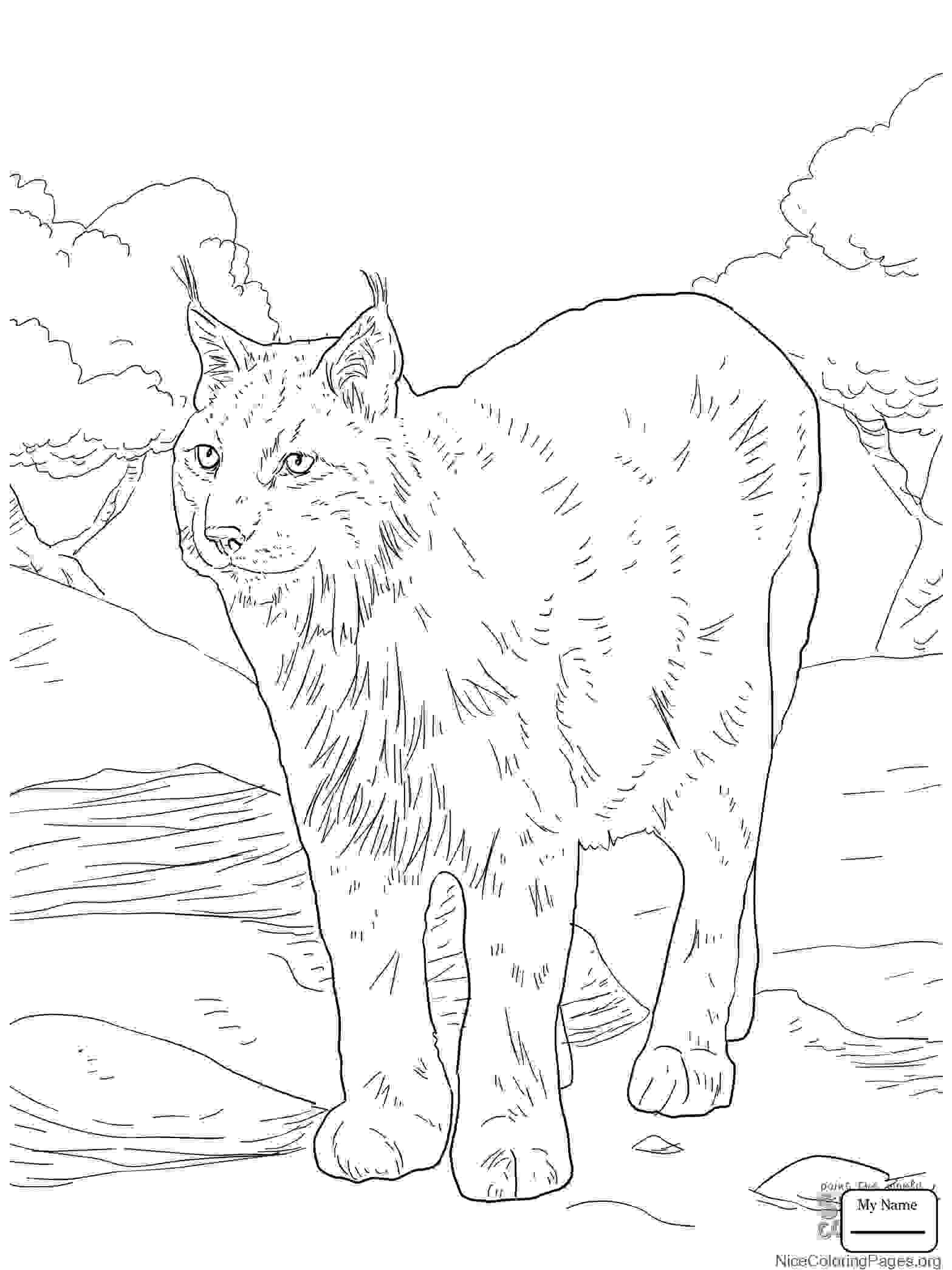 1567x2089 Archaicawful Lynx Coloring Pages For Kids Page Cat Printable