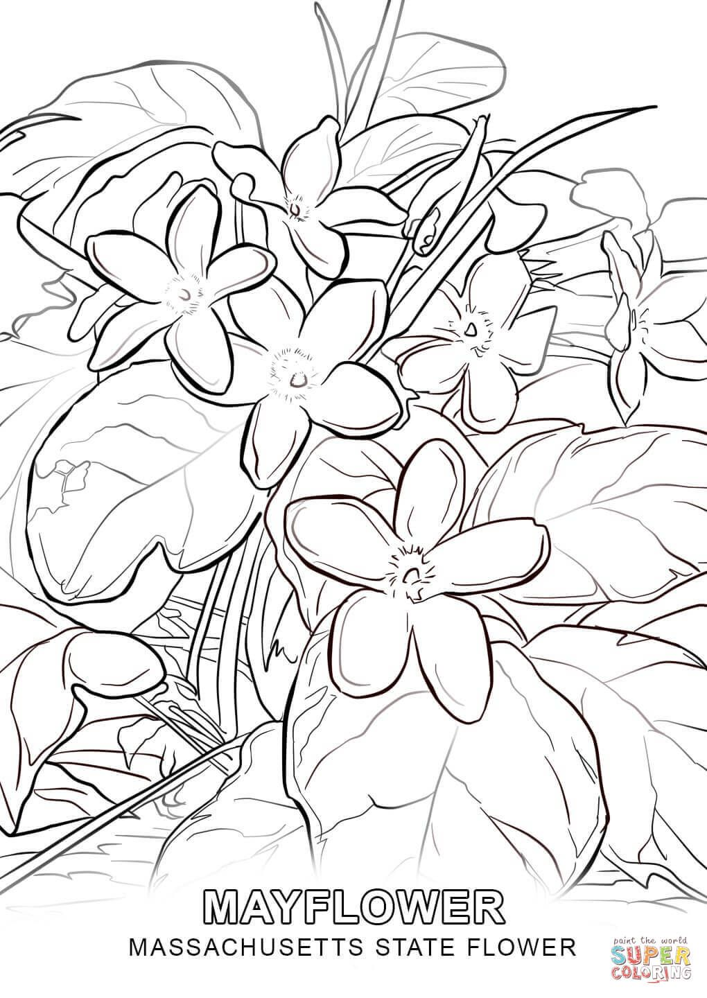 1020x1440 Introducing Delaware State Flower Coloring Pag