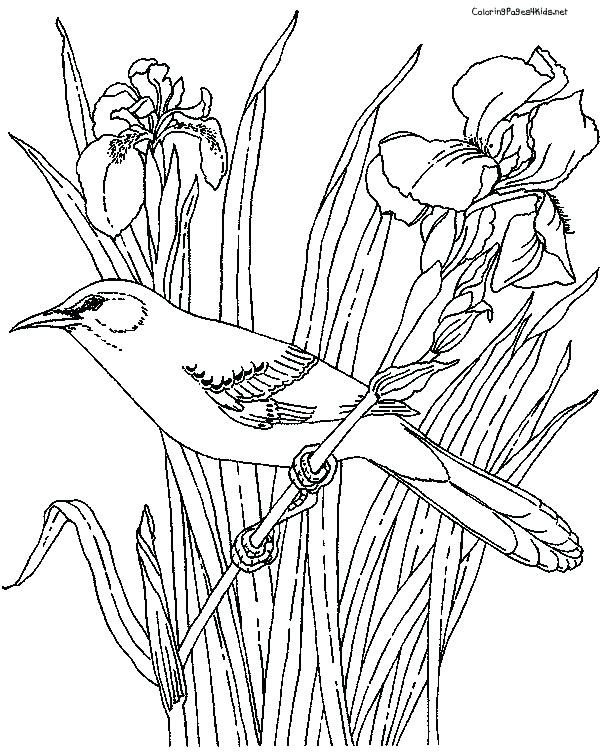 600x756 Mockingbird Coloring Page Mockingbird Coloring Page Fine Picture