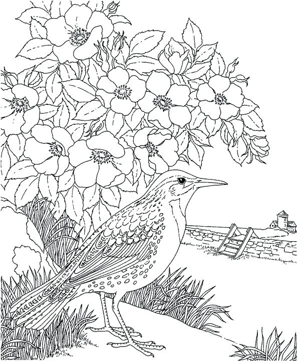 593x720 Mockingbird Coloring Page To Kill A Mockingbird Coloring Pages