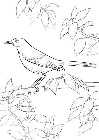 340x480 Mockingbird Coloring Page