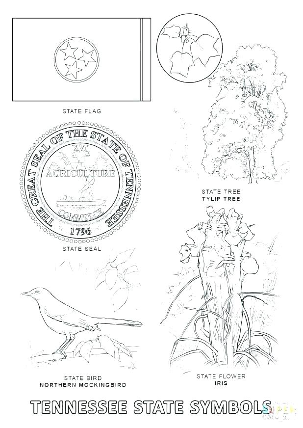 618x872 Mockingbird Coloring Page