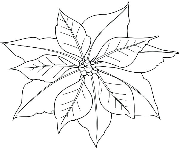 600x497 Mistletoe Coloring Pages Poinsettia Coloring Pages Simple