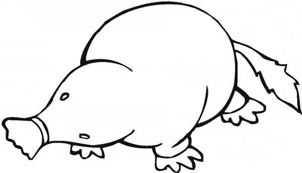 600x344 Animal Kingdom Mole Coloring Pages Batch Coloring