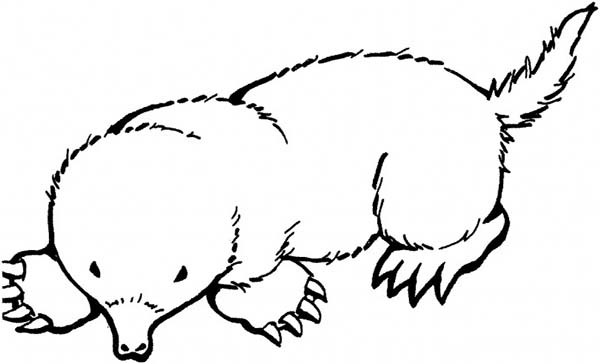 600x364 Mole Coloring Page Broad Footed Mole Coloring Pages Batch Coloring