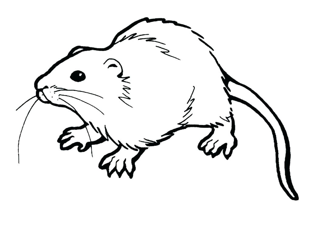 1050x746 Mole Coloring Page Index Coloring Pages Mole Crab Coloring Page
