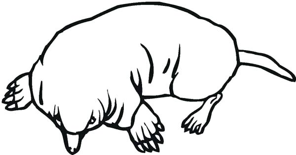 600x315 Mole Coloring Page Mole Coloring Pages Mole Coloring Pages
