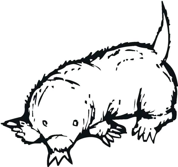600x561 Mole Coloring Page Sketch Of A Mole Coloring Pages Mole Rat