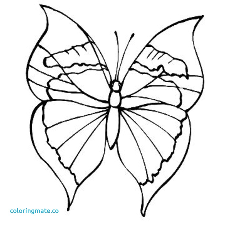900x900 Monarch Butterfly Coloring Page Fresh Free Throughout Pages